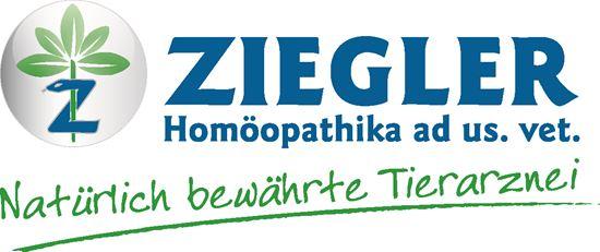 logo-inet
